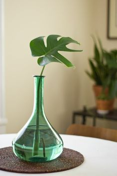 tropical leaf interior design