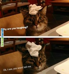 Cat memes I will figure it out by myself...