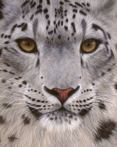 Snow leopard painting by Rachel Stribbling