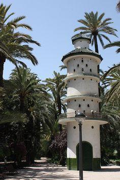 Las palmeras de Elche / The palm trees of Elche #Alicante #Spain