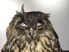 © Blende, Michaela Gerads, ein leichter Windstoß   Greifvogelstation in Gangelt. Bei Wind fotografiert.