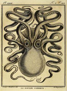 Kraken Print Octopus Poster Octopus Art von AdamsAleArtPrints