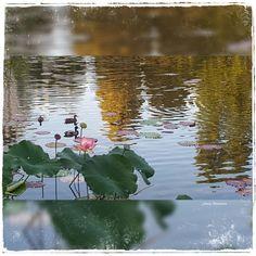 #mood #love #art #arte #ARTIST #pincildrawing #graphite #graphitedrawing #sketch #sketches #sketching #drawing #design #night #painting #lifedrawing #artwork #sketchbook #photo #flowers #paint #girl #women #lady #face #photography #natura #flowers