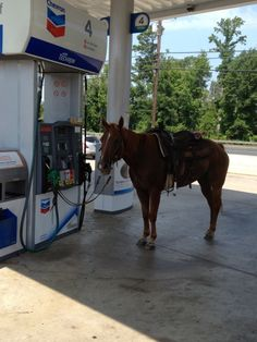 Totally some shit I'd do. -Where are you? -At the gas station. -But your car is here.... -Yeah, I took Chauncey