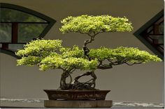 Bonsai Reference image for miniature tree