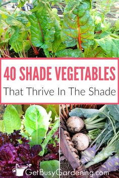 Vegetables That Grow In Shade Shade vegetable gardening isn't bad or difficult. Some vegetables actually prefer the shade, and shade loving vegetable plants will suffer in the full sun. With this list of over 40 vegetables that grow in shade, you'll be List Of Vegetables, Planting Vegetables, Organic Vegetables, Growing Vegetables, Easy Garden, Edible Garden, Garden Art, Gardening For Beginners, Gardening Tips