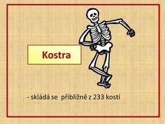 Kostra - skládá se přibližně z 233 kostí.> Name Art, Human Body, Charlie Brown, School, Chemistry, Biology