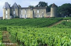 How romantic the vineyards in Bordeaux are. Let's go!