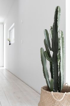 Musta ovi: vinkkiä toimivan työhuoneen suunnitteluun benus, bedrooms, f Cacti And Succulents, Cactus Plants, Garden Plants, Indoor Garden, Indoor Plants, Home And Garden, Succulent Hanging Planter, Pot Plante, Plants Are Friends