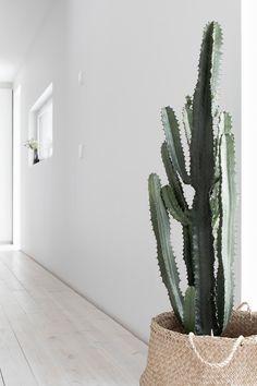 Musta ovi: vinkkiä toimivan työhuoneen suunnitteluun benus, bedrooms, f Indoor Cactus Plants, Garden Plants, Indoor Garden, Home And Garden, Succulent Hanging Planter, Pot Plante, Plantar, Cacti And Succulents, Amazing Gardens