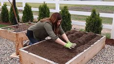 How to Grow Potatoes From Store Bought Potatoes - Gardening Channel Potato Gardening, Planting Potatoes, Growing Sweet Potatoes, Growing Carrots, Potato Barrel, Grow Potatoes In Container, How To Store Potatoes, Vegetable Garden Planner, Worm Composting
