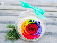 Martie, Christmas Bulbs, Holiday Decor, Beautiful Things, Wallpapers, Box, Home Decor, Snare Drum, Decoration Home