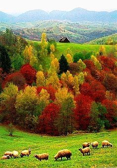 Fall Landscape beautiful red scenic nature trees forest autumn leaves fall orange landscape sheep foliage