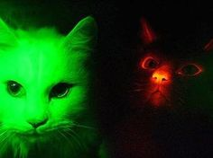cute face glowing eyes - Google Search