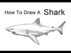 Marvelous Drawing Animals In The Zoo Ideas. Inconceivable Drawing Animals In The Zoo Ideas. Shark Teeth Crafts, Shark Craft, Super Coloring Pages, Adult Coloring Pages, Step By Step Painting, Step By Step Drawing, Animal Paintings, Animal Drawings, Great White Shark Drawing