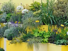 Container and Small-Space Gardening: Cover a wall or create a barrier with a tiered planter. Tiered Planter, Tiered Garden, Small Space Gardening, Garden Spaces, Garden Plants, Garden Trees, Garden Web, Flowering Plants, Balcony Garden