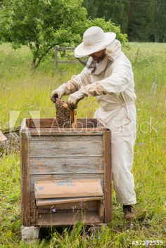 Beekeeper in his apiary with bees Bee Keeping, Royalty Free Photos, Bees, Clip Art, Stock Photos, Flowers, Image, Royal Icing Flowers, Flower