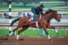 Abel Tasman worked 4 furlongs in at Santa Anita on Feb. Abel Tasman, Horse Racing, Race Horses, Horse Profile, Horse Names, Sport Of Kings, Horse Pictures, Thoroughbred, Kentucky Derby