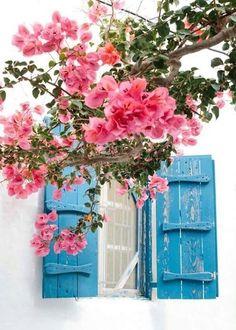 loveliegreenie Mykonos Greece, Santorini, Mykonos Island, Beautiful Flowers, Beautiful Places, Photo Diary, Greece Travel, Greek Islands, Belle Photo