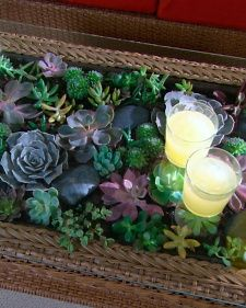 Learn how to make a beautiful terrarium coffee table using colorful, easy-to-maintain succulents.