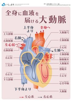 Pin on 看護 Healthy Choices, Healthy Life, Branches Of Biology, Acupressure Therapy, Brain Tricks, Medical Science, Anatomy And Physiology, Science And Nature, Human Body