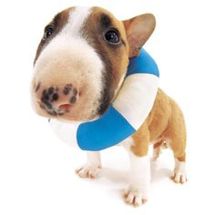 "Artlist Collection THE DOG (Bull Terrier) — ""summer"""