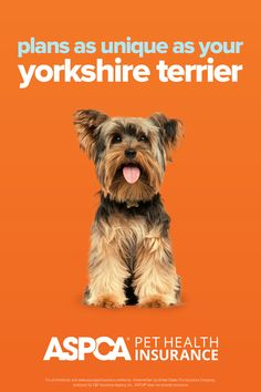 Every breed has different health needs. ASPCA Pet Health Insurance plans were designed with the needs of Yorkshire Terriers in mind. Return to your quote today to view customized plan options for your pet. Health Insurance Plans, Pet Insurance, Health Care Coverage, Yorkshire Terriers, Be Yourself Quotes, Dog Lovers, Dog Cat, The Unit, How To Plan