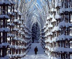 Malga Costa Tree Cathedral, Val de Sella, Italy  artwork by Giuliano Mauri Arte Sella
