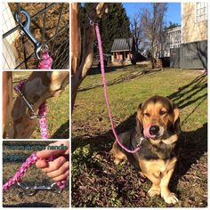 We are now selling leashes with clips on both ends! This allows you to tie your dog up (for a short amount of time) and also be able to walk them! There is actually a d-ring near the end of the leash so you can hook the clip onto it and turn it in to a handle!  If you hook the other clip to it it makes the handle bigger and you can keep your pup close to you! (Great for crossing roads!) Instrested? DM me!! I can do this any colors Requested!!!  #customleash #paracordleash #paracord550leash…