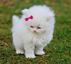The real life Hello Kitty!! :) So cute!  I always thought if I had a white cat, I would name her Hello Kitty! :) <3