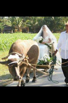 31 Best Ilocano images in 2018   Ilocos, Norte, Philippines
