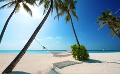 Hammock, beach and palms tropical wallpaper Hammock Beach, Hammocks, Strand Wallpaper, Beach Wallpaper, Hd Wallpaper, Maldives Wallpaper, Summer Wallpaper, Tropical Wallpaper, Scenery Wallpaper