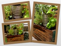 Herbs planted in vintage boxes and milk crates. I love hunting in Antique shops for containers like these! JLH
