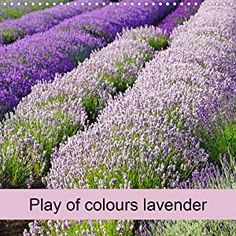 Play of colours lavender (Wall Calendar 2021 300 × 300 mm Square) Marke: Babett Paul - Babett's Bildergalerie Lavender, Colours, Square, Languages, Stability, Turning, Spiral, Wall