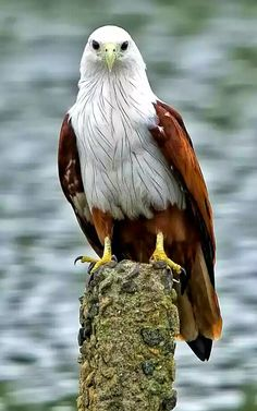 all about pets, wild life animals and sea animals. Eagle Pictures, Bird Pictures, Animal Pictures, Pretty Birds, Beautiful Birds, Animals Beautiful, Nature Animals, Animals And Pets, Cute Animals