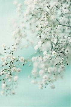 Wall paper phone pastel mint green 36 Ideas for 2019 Nature Iphone Wallpaper, Images Wallpaper, Pastel Wallpaper, Wallpaper Backgrounds, Mint Green Wallpaper Iphone, Wallpaper Ideas, Mint Green Aesthetic, Aesthetic Colors, Flower Aesthetic