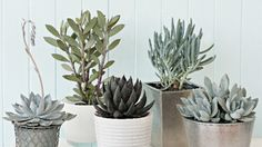 Succulents are fun to work with; with so many varieties there is something for everyone.