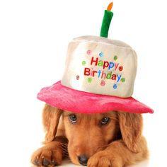 Happy Birthday Puppy, Happy Birthday Quotes, Happy Birthday Images, Birthday Pictures, Happy Birthday Wishes, Birthday Msgs, Girl Birthday Cards, Happy Birthday Greeting Card, Birthday Messages
