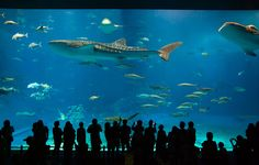 The Okinawa Churaumi Aquarium in Osaka, Japan | 22 Destinations Science Nerds Need To See Before They Die