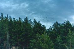 Forest Sky Birds