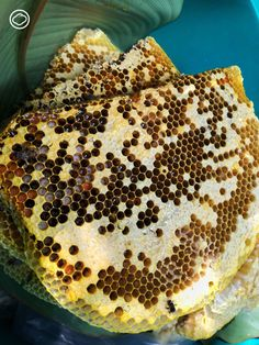 ชิมน้ำผึ้งเดือนห้าแห่งหมู่บ้านหินลาดใน น้ำผึ้งรสเฉพาะที่มีที่มาจากการดูแลป่าของชาวปกาเกอะญอ