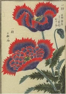 """lunar-danse: """" These images come from ten albums of flora containing more than 700 images from the Museum at the University of Tokyo: honzo database (english home page). [via armchair aquarium annex]. Botanical Drawings, Botanical Illustration, Botanical Prints, Illustration Art, Japanese Prints, Japanese Art, Art Japonais, Japanese Flowers, Japanese Painting"""
