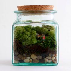 Muéstrelos que es el musgo: 12 tesoros terrario | MNN - Madre Naturaleza red