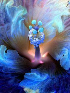 Mystic hibiscus Beautiful gorgeous pretty flowers