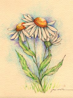 Daisies are my favorite flowers! Drawing by Joni Walker.