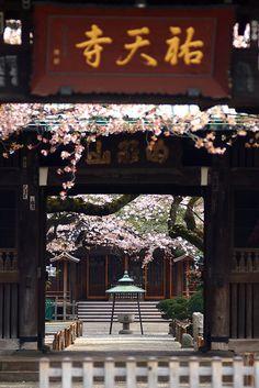 Yuten-ji, Tokyo, Japan 祐天寺 東京