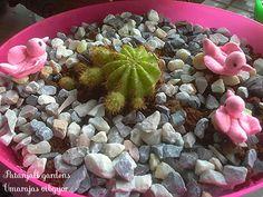 umarajas vibgyor: Cactus corners
