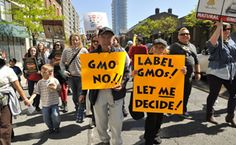 On July 1, Vermont's GMO Labeling law took effect. The food industry has already begun to respond and make changes to their products. Here are six ways consumers are being affected by GMO labeling.