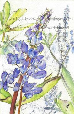 Tiny Botanical Print - Graduation Gift - Wedding - ACEO - Blue - Purple - Flower -  Lupin Flowers - Fine Art Print via Etsy