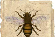 Αποτέλεσμα εικόνας για bees shaman melisses